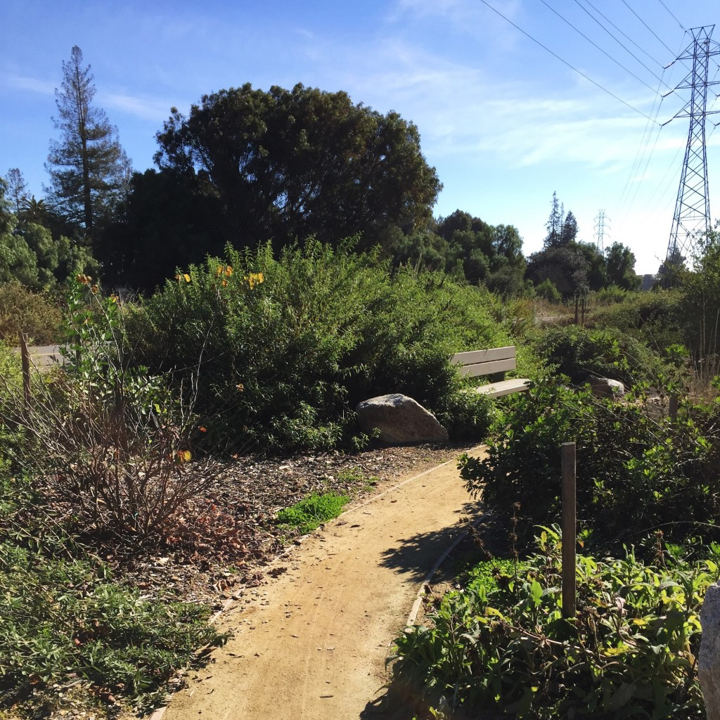 Side Path - Stevens Creek Trail